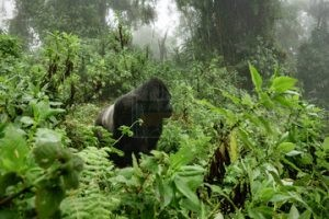 congo safari tour excursions